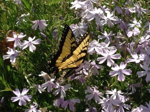 butterflyingarden