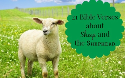 21 Bible Verses About the Sheep and the Shepherd – Heather C