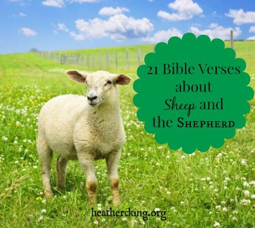 Verses-sheep